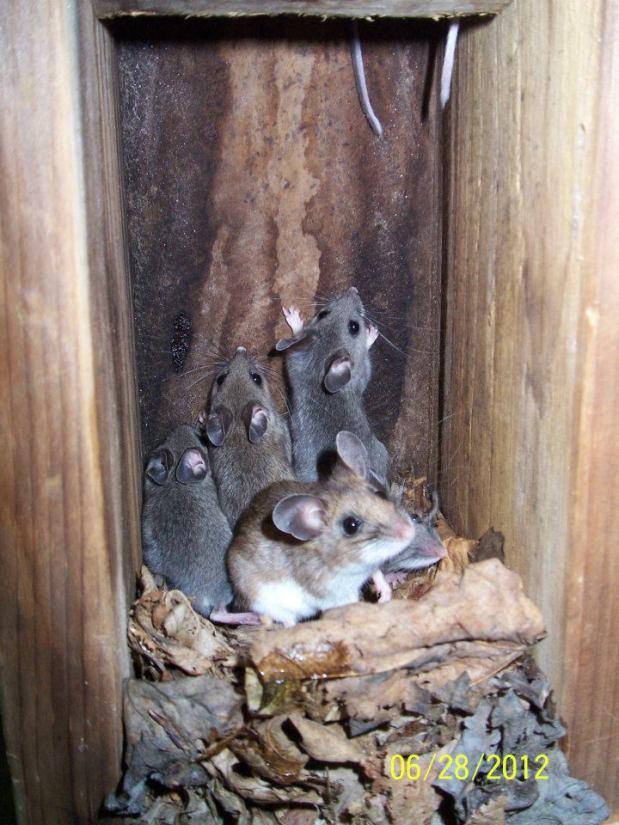Mice: My biggestWorry!