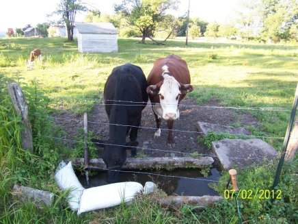Yes that is my water source! The girls were kind enough to share.