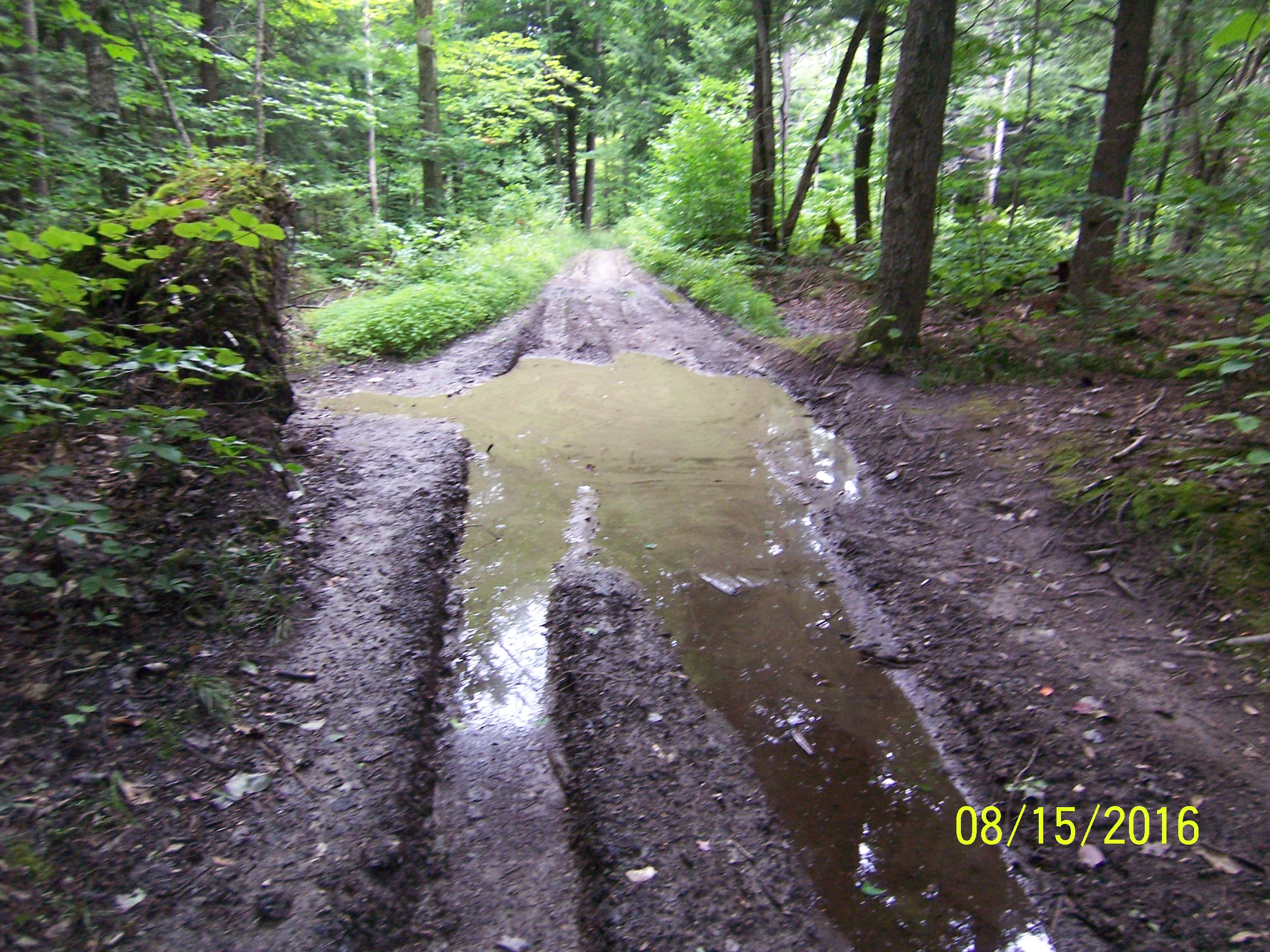 Long Trail 8 15 Nye S Green Valley Farm 4 Miles Hike Light Hike Happy